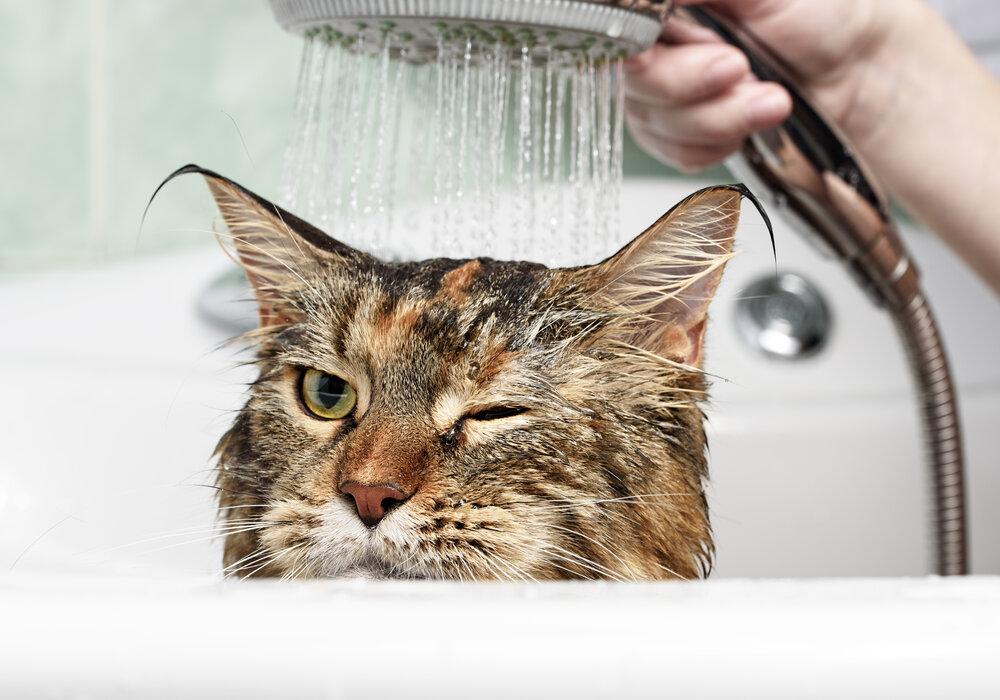 Bathe Your Cat