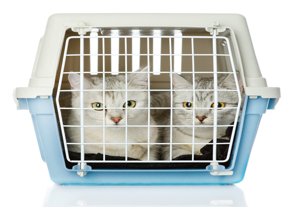 cat carrier size