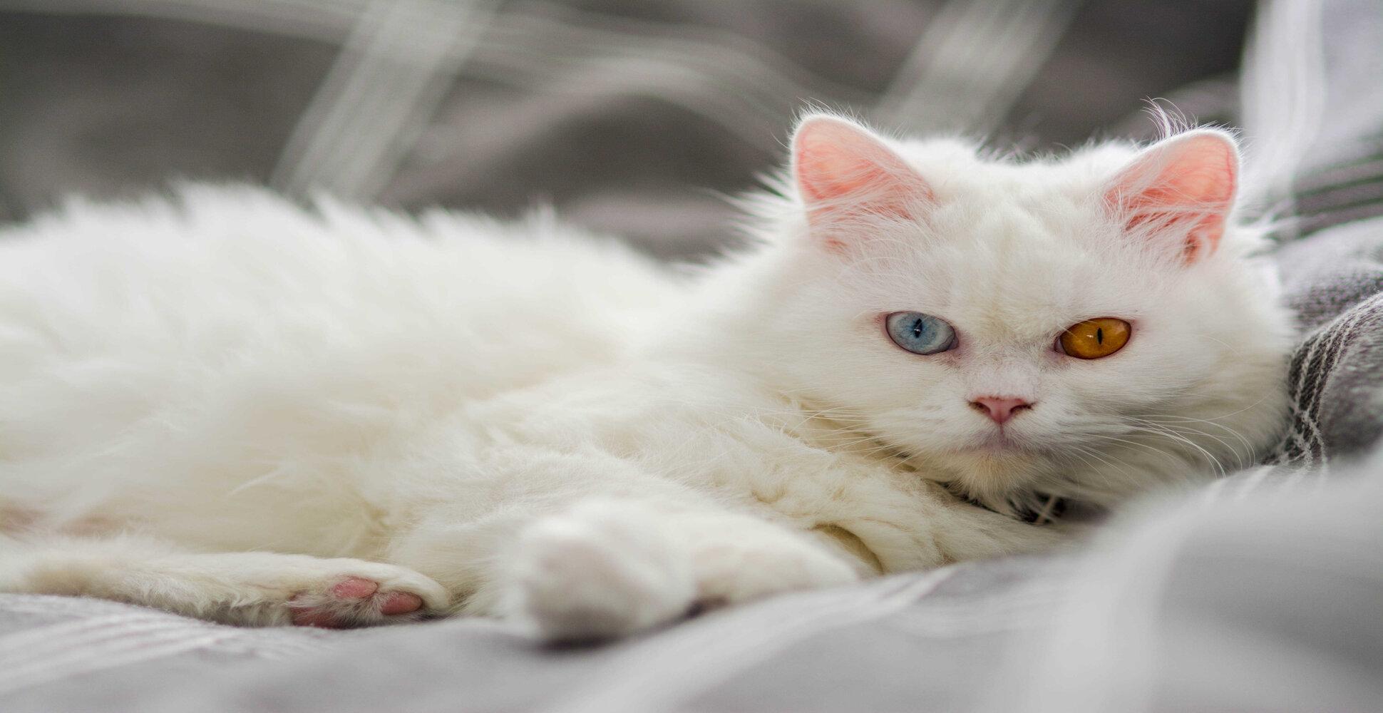cat eye colors explained