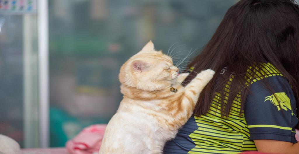 cat bite my hair