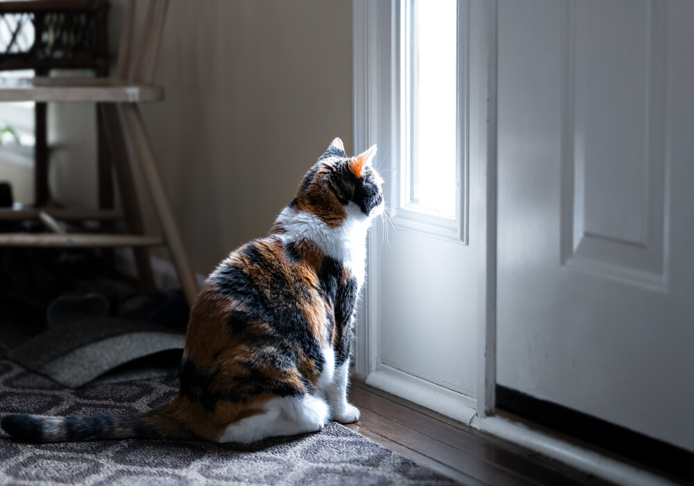 How Long Can You Safely Leave Your Cat Alone?