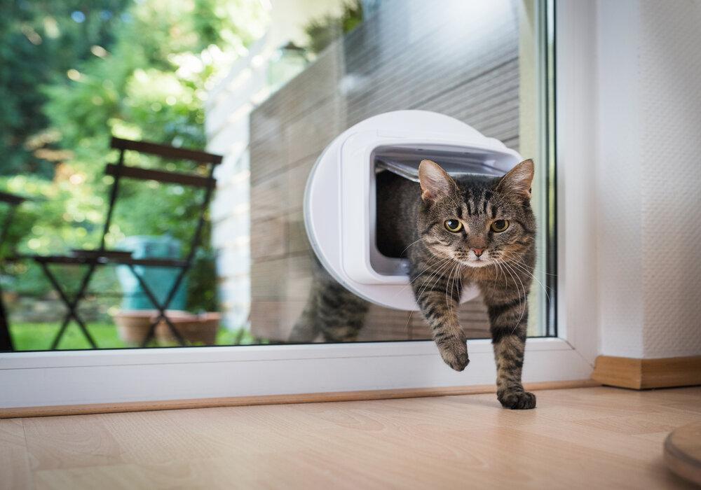 indoor cat fleas
