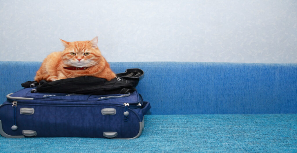 How to Sedate Your Cat For Travel