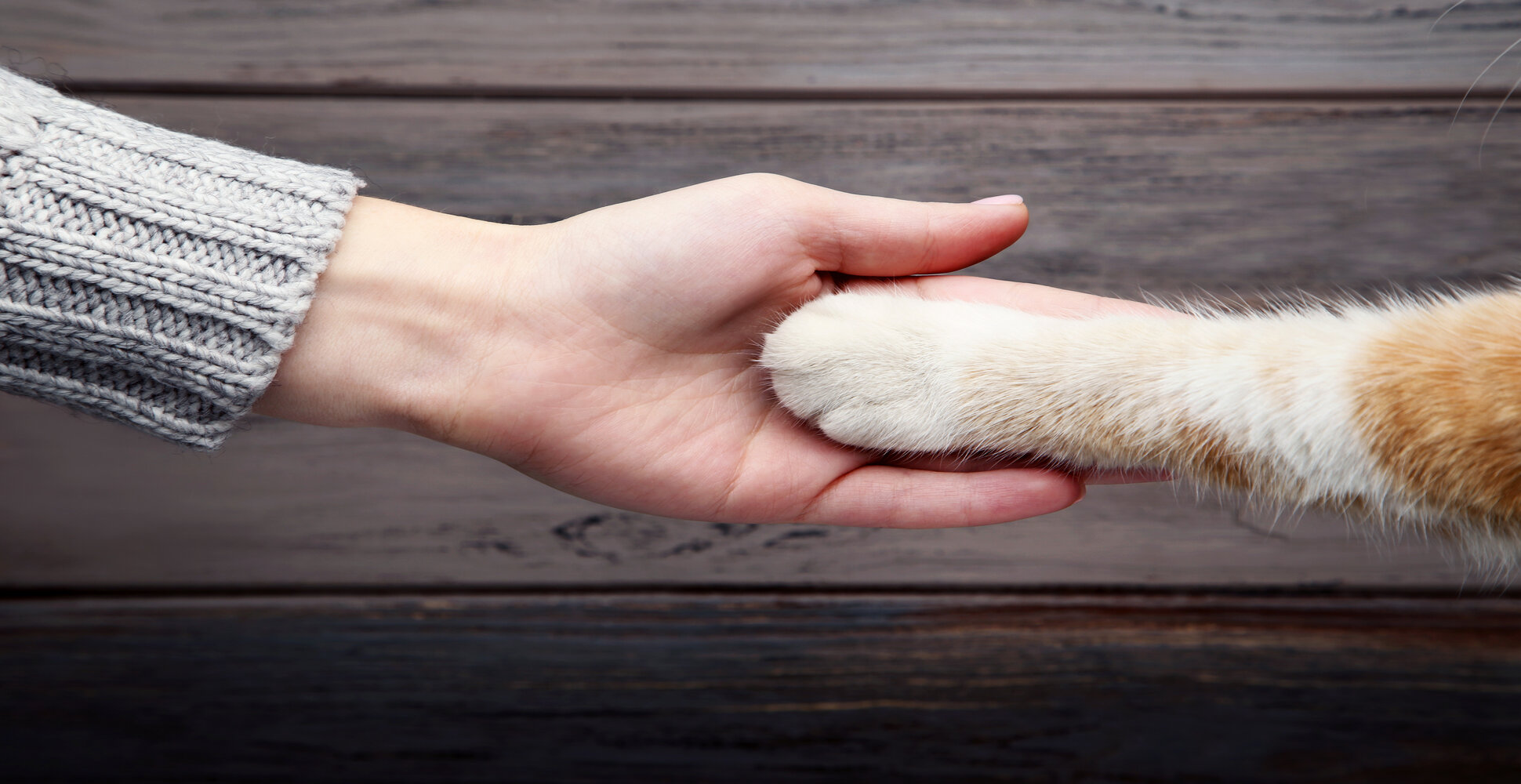 It's one of the most charming and endearing cat behaviors - you look over to find that your cat has gently stretched their paw towards you. Although it's adorable, cats can be hard to decipher, so you may be wondering why exactly your pet is doing this. Here are some of the top reasons why your cat might be reaching their paw out to you. 1. Your cat is indulging in a nice, deep stretch. Cats love to stretch, and you've probably noticed them stretching before as you move throughout the house. When they reach their paw out to you, they might just be in need of a comfy stretch. Stretching is a very relaxed behavior, so take it as a compliment - your cat is nice and calm around you. 2. Your cat wants to be cuddled. This is possibly the most flattering explanation for why your pet might be reaching their hand out. Cats have a strong bond with their owners, so reaching out their paw might be an indication that they want some physical affection. 3. Your cat is hungry. Cats also like to reach their paws out when they need something as a way of getting your attention. One common explanation for this is that they need food. If your cat typically gets hungry at a certain time and they start reaching their paw out, check their food bowl. 4. It's playtime! If your cat has a lot of energy and they reach their paw out to you, it could be an indication that they want to play. Cats need external stimulation from humans, so regular playtime is very important. Keep some fun toys around the house to facilitate easy play sessions. 5. Your cat is trying to get your attention in some other way. If you've ruled out a desire for cuddles, food, or playtime, your cat's outstretched paw may be a request for attention in some other form. For example, they may want you to clean their litter box, open a door, or look out the window. 6. Your cat wants to show affection. When your cat stretches their paw out, they could actually be mimicking you and want to give you a 'pet'. This can be a very swee