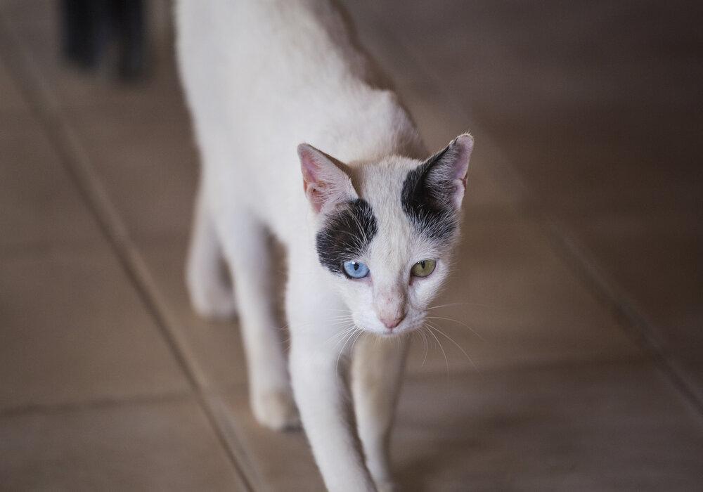 cat so skinny