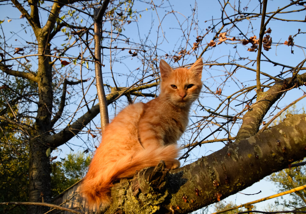 How to Get Your Cat Out Of A Tree