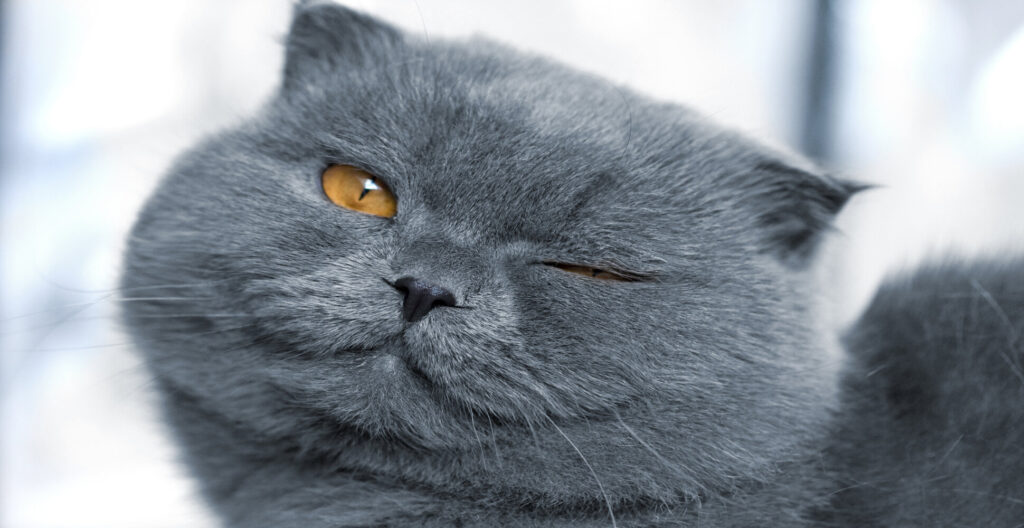 What does it mean when your cat winks at you?