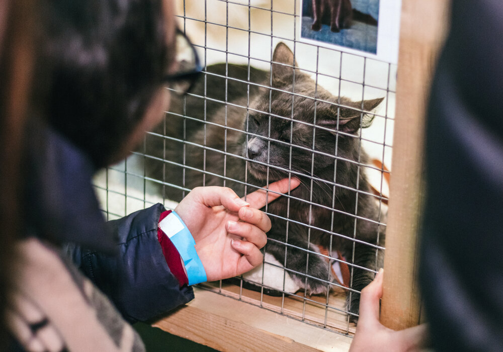 Adopting Cat From Shelter