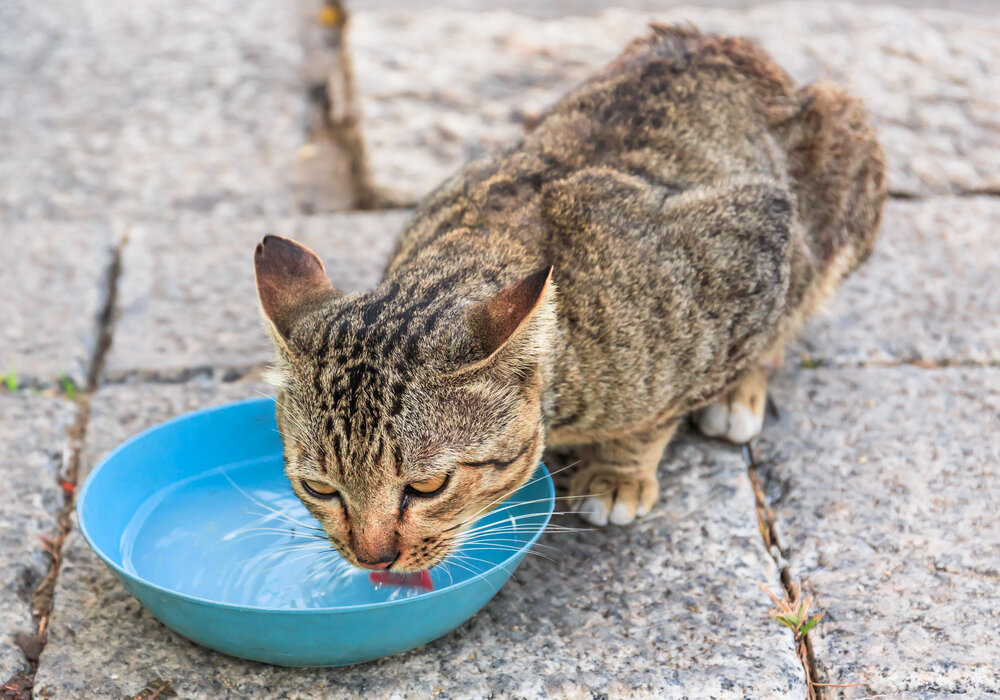 What does it mean when a stray cat comes to your house