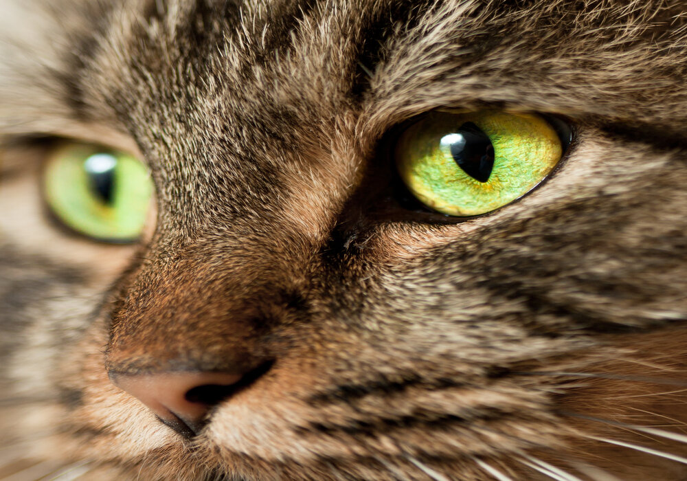 green cat color eyes