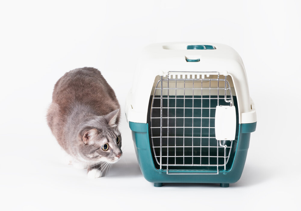 hard carrier size for cat