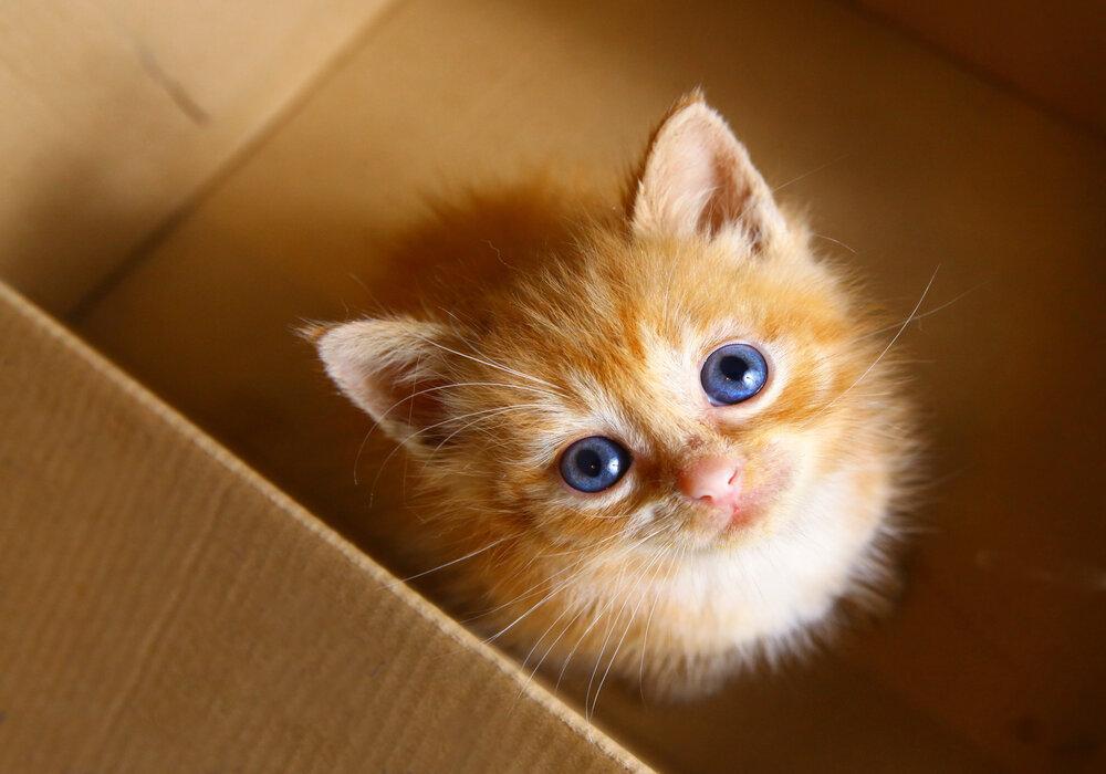 kitten eye colors