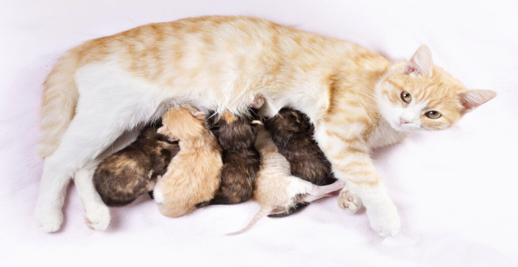 How to Stop Your Cat from Moving Her Kittens