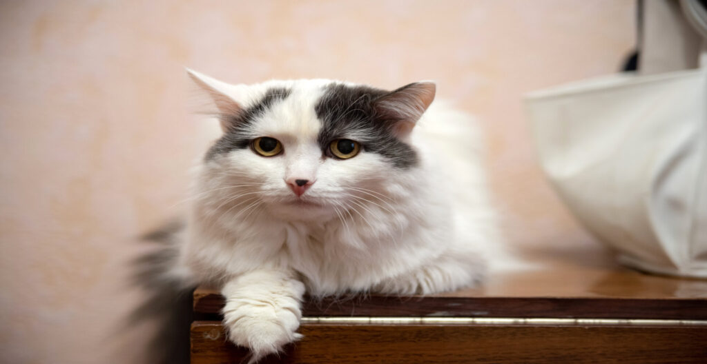 : Signs Your Pet Cat is dying