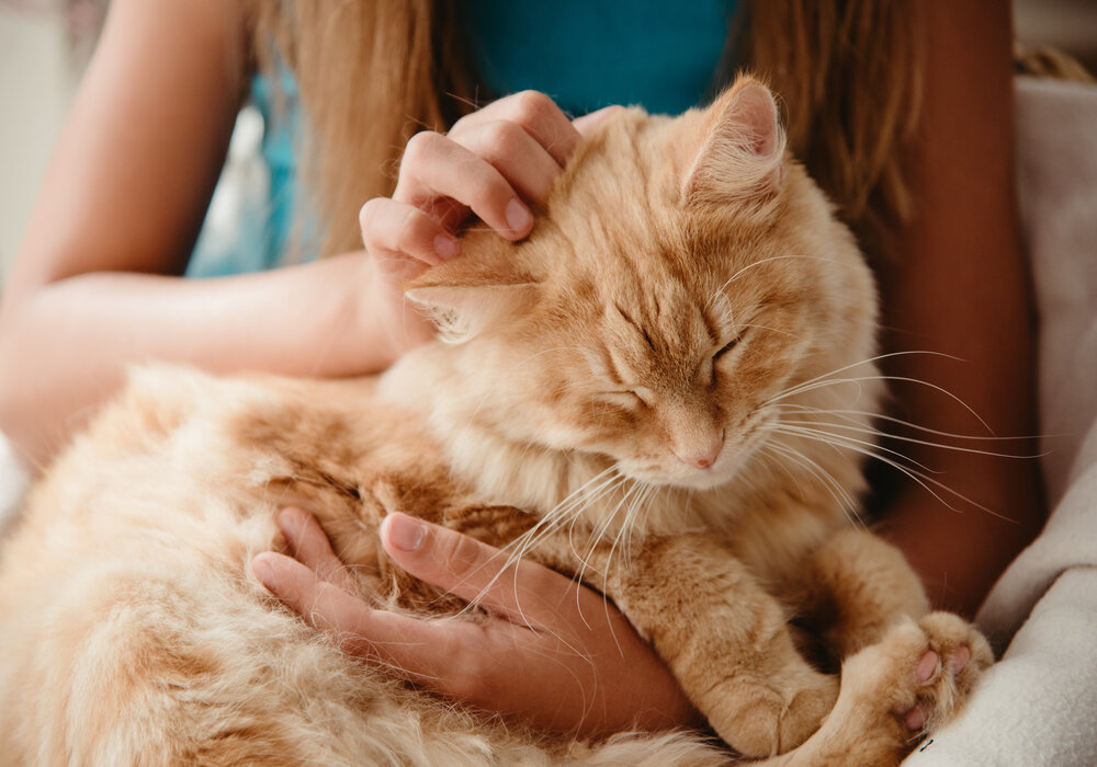 Signs Your Pet Cat is dying