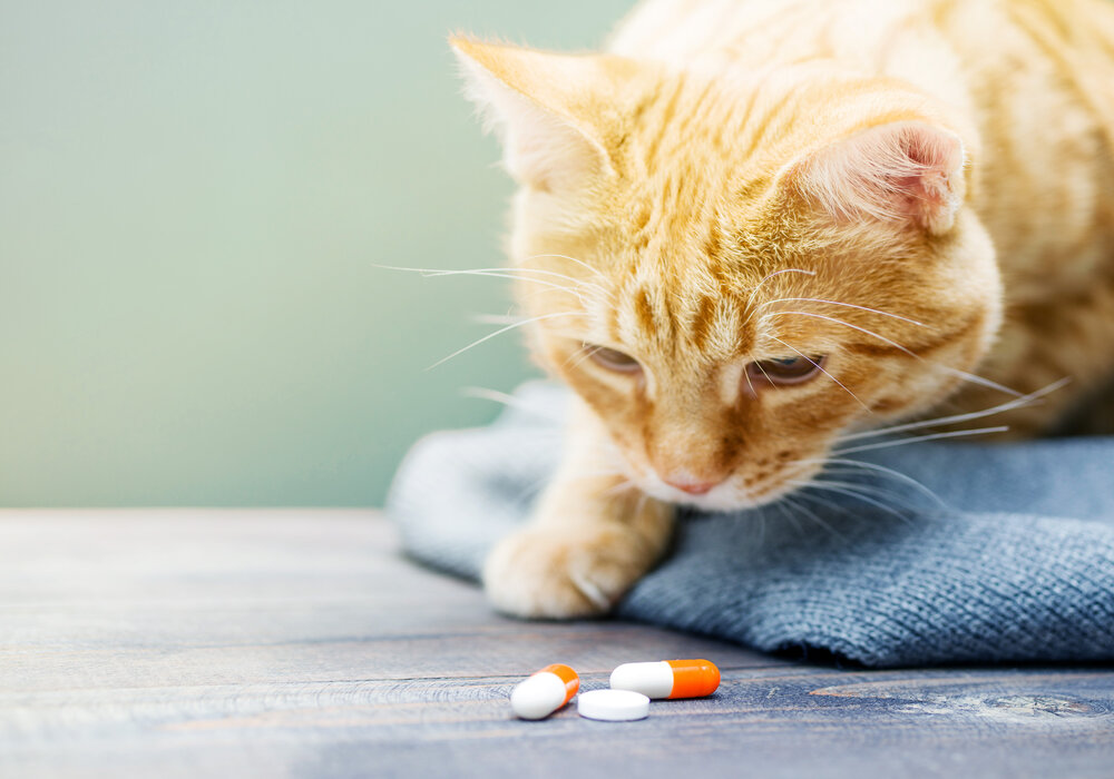 How to Give Your Cat Liquid Medicine