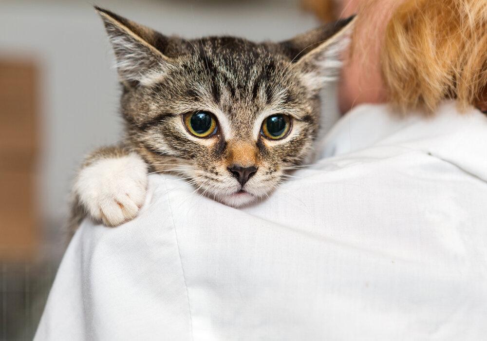 Adopting Rescue Cat