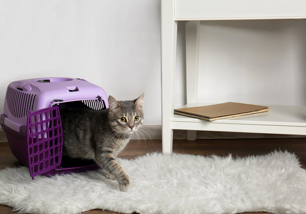 best Carrier for Your Cat