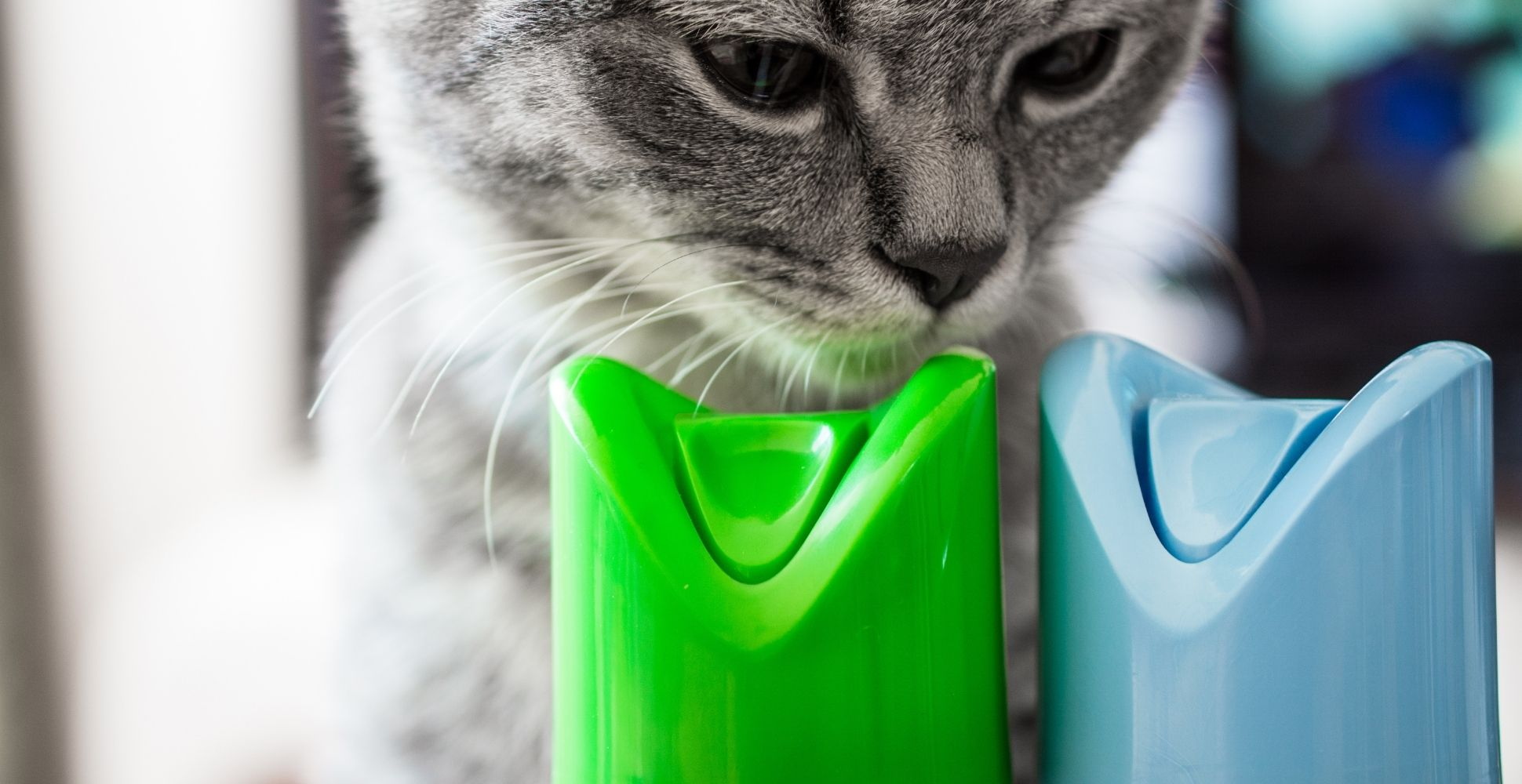 best-air-freshener-for-cats