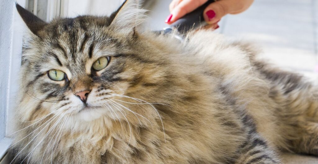 best-cat-brush-for-long-haired-cats