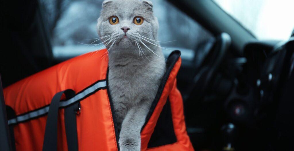best-cat-carrier-for-long-car-trips
