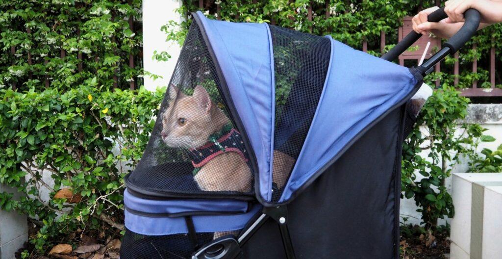 best-cat-carrier-for-nervous-cat