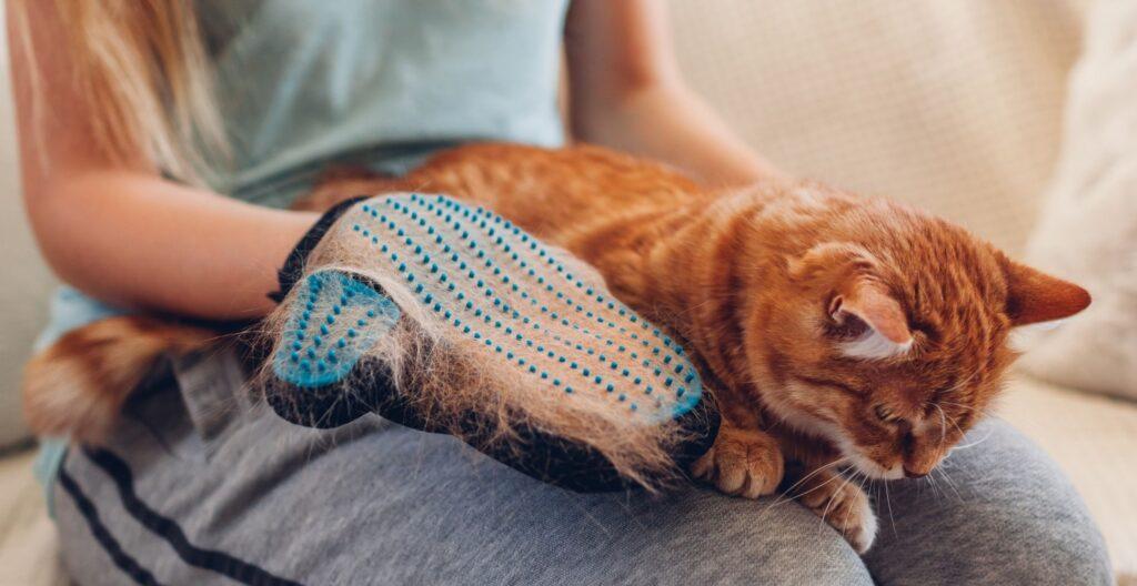 best-cat-grooming-glove