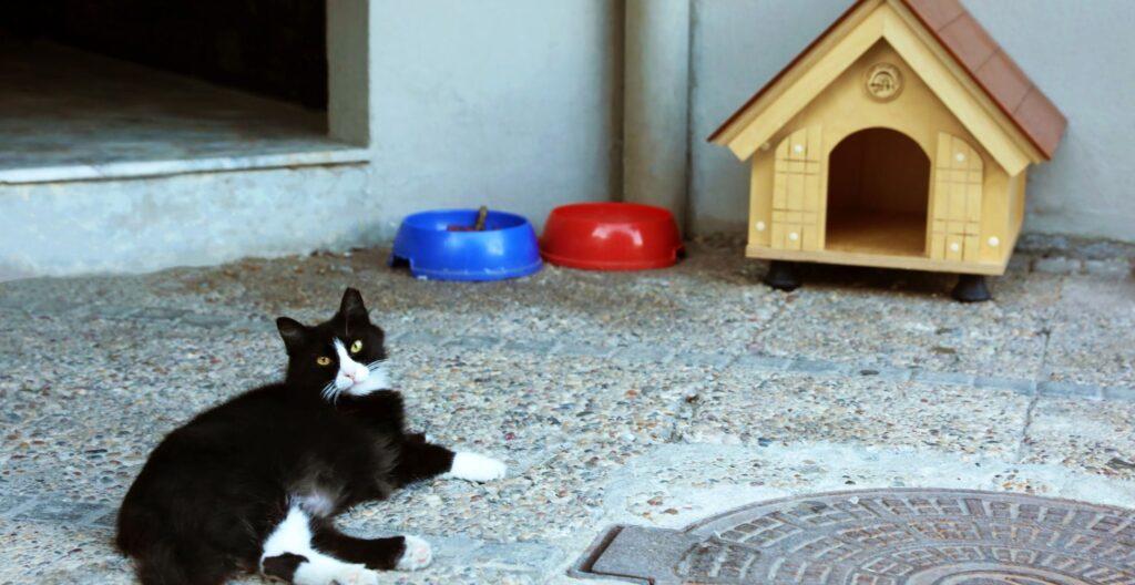 best-cat-house
