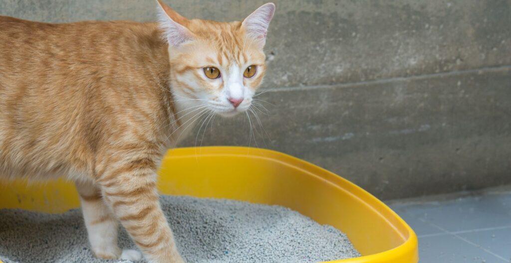 best-cat-litter-for-tracking