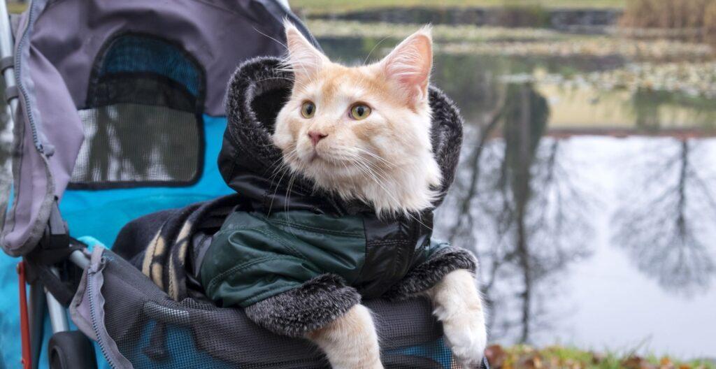best-cat-stroller