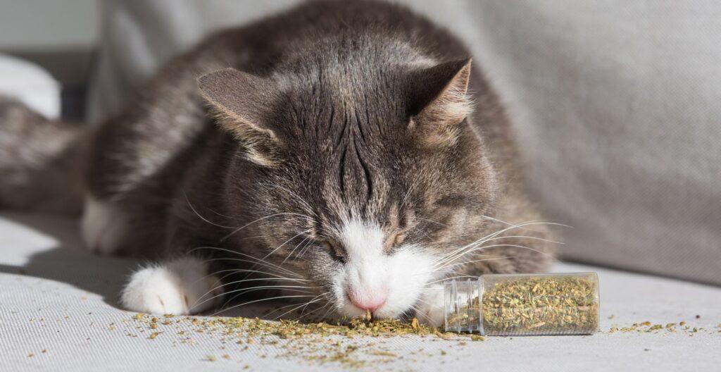 best-catnip