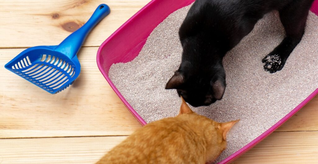 best-clumping-cat-litter-for-multiple-cats
