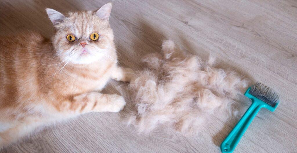 best-dematting-tool-for-cat
