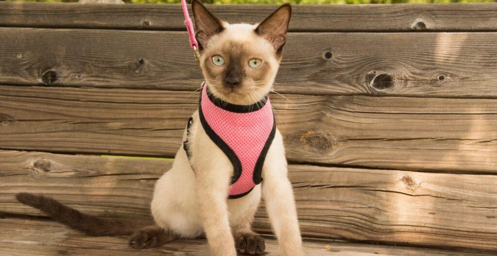 best-escape-proof-cat-harness