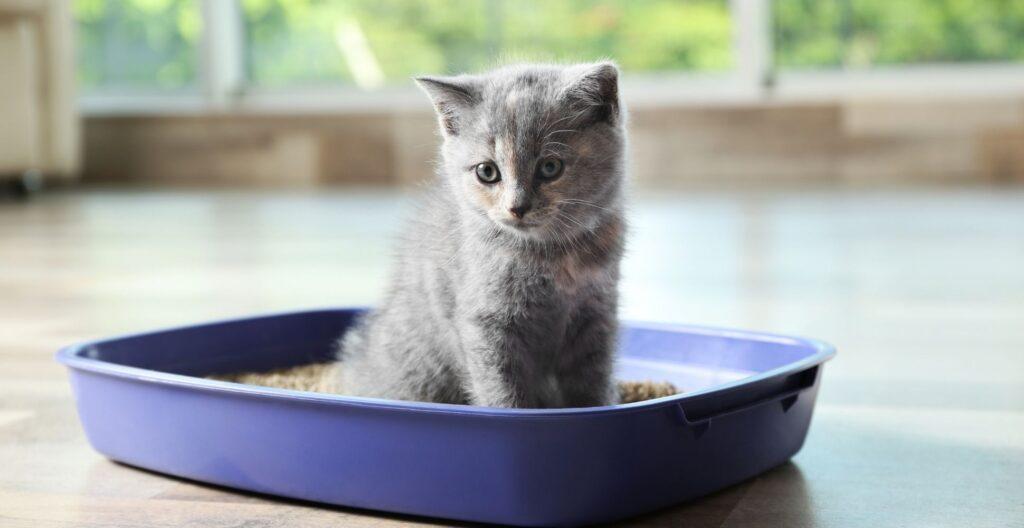 best-flushable-cat-litter