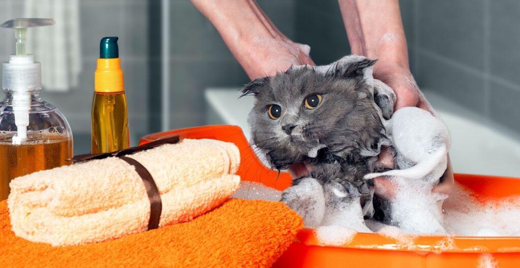 best-kitten-shampoo