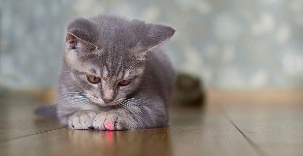 best-laser-pointer-for-cat