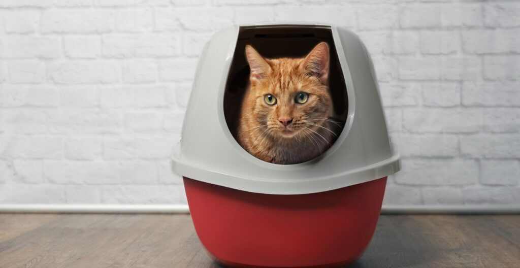 best-litter-box-for-small-apartment