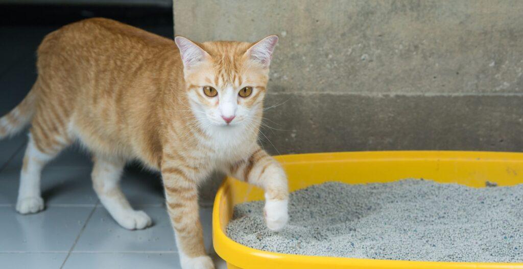 best-litter-for-declawed-cat