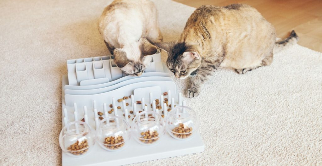 best-slow-feeder-for-cats
