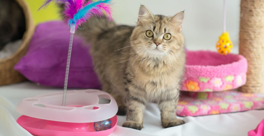 best-toys-for-cat-home-alone